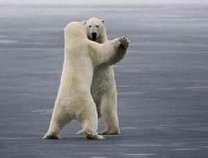 So easy a polar bear can do it.